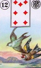 Lenormand Birds Card Combinations