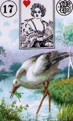 Lenormand Stork Card Combinations